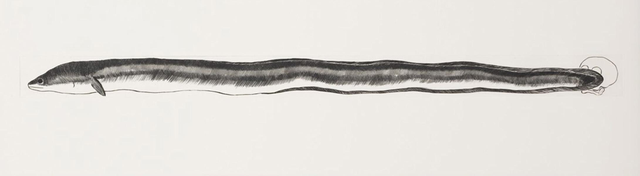 Pond Life (Eel)