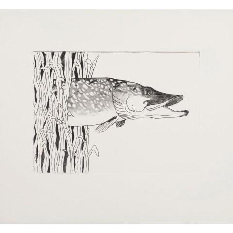 Pond Life (Pike)